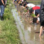 若い人達が米作りから酒造りまで参加したお酒が遂に完成しました!